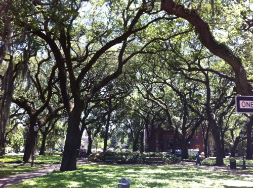 Another beautiful square with the gorgeous old oaks.