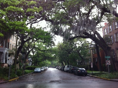 The oak trees create the most beautiful canopy over the streets.