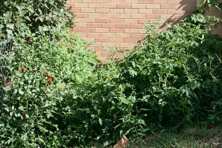 Tomato and Black Bean Jungle